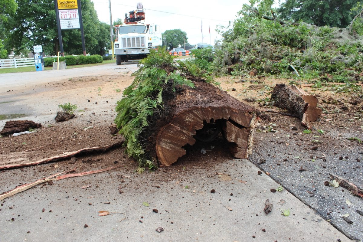 Emergency Tree Removal or Stump Removal at your service.