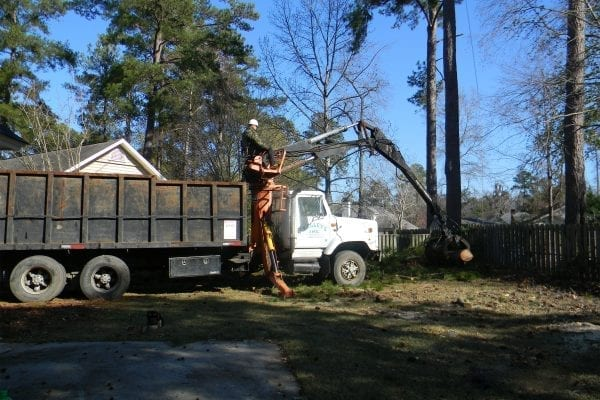 Tree Removal service, going out on a limb so you dont have to.