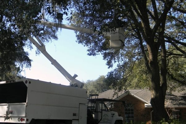 No Tree to big for our Tree Trimming services, call us today for free estimate.